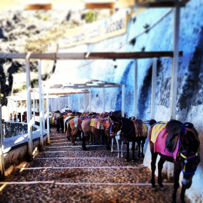 Donkeys in Thira