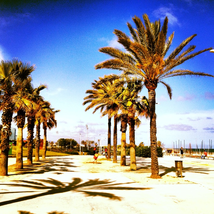 Barcelona Boardwalk, Palm Trees