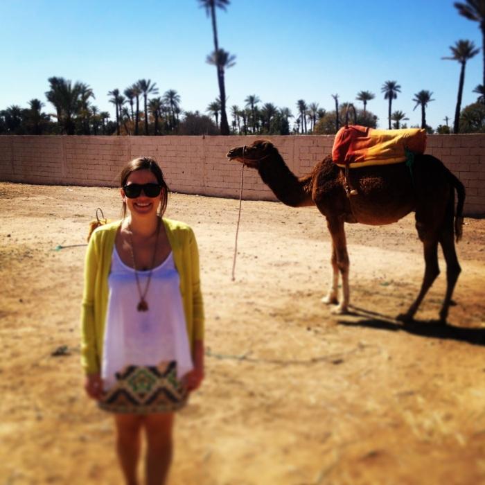 Marrakech camels