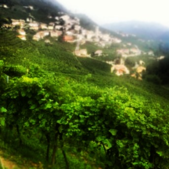 Valdobbiadene Wineries and Vineyards